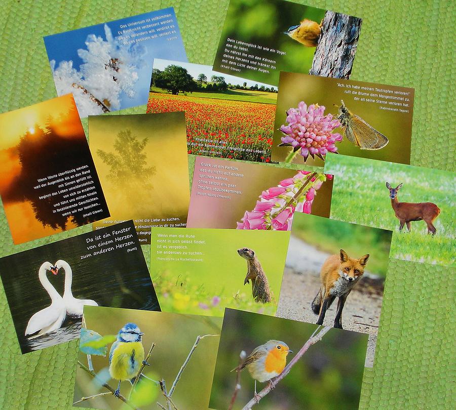 Naturpostkartenset